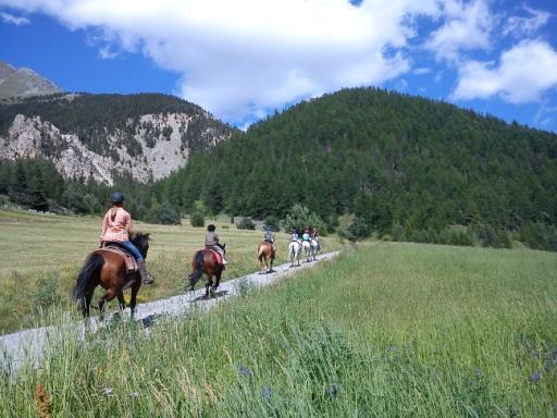 Randonnée équestre, cheval